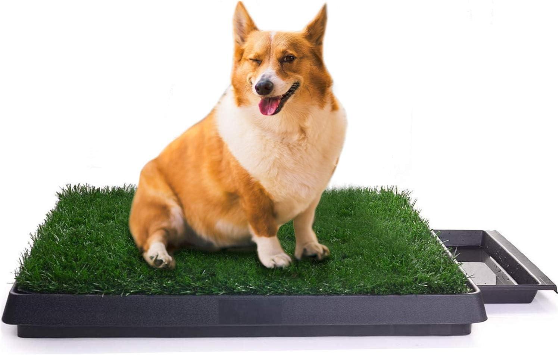 litiere pour chien sur terrasse